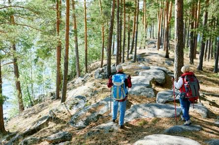 nordic walking v lese