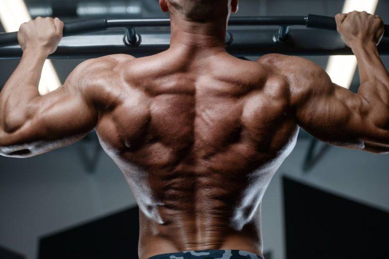 steroidy chrbat rast svalov
