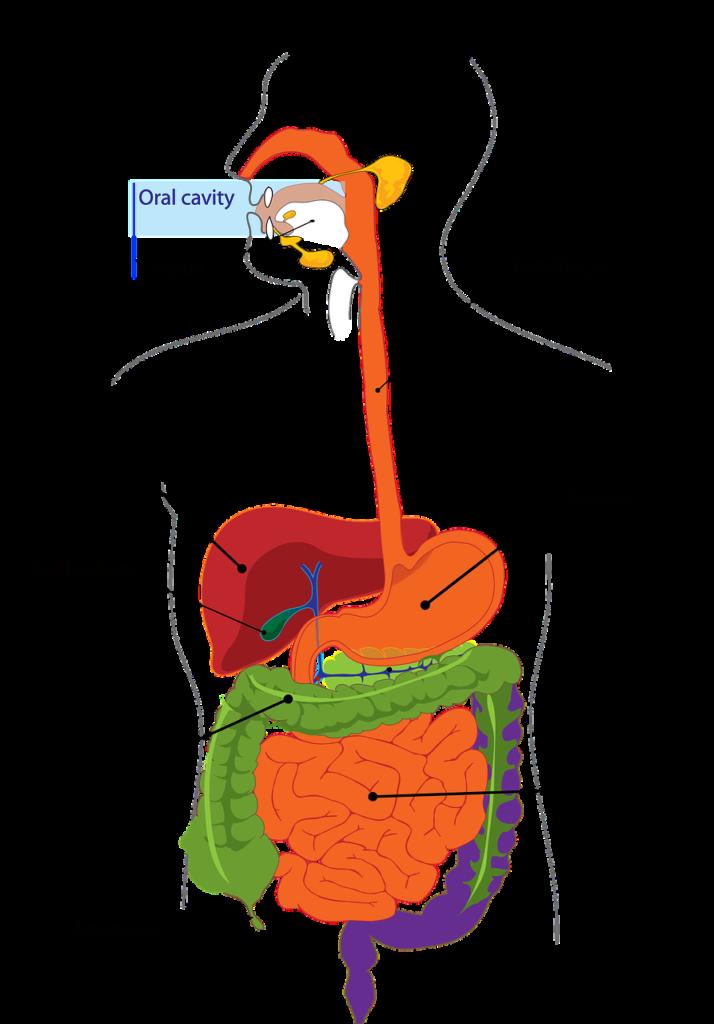 Príznaky celiakie