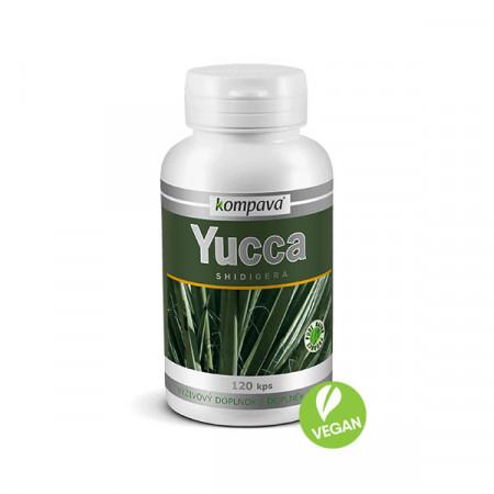 yucca fitness